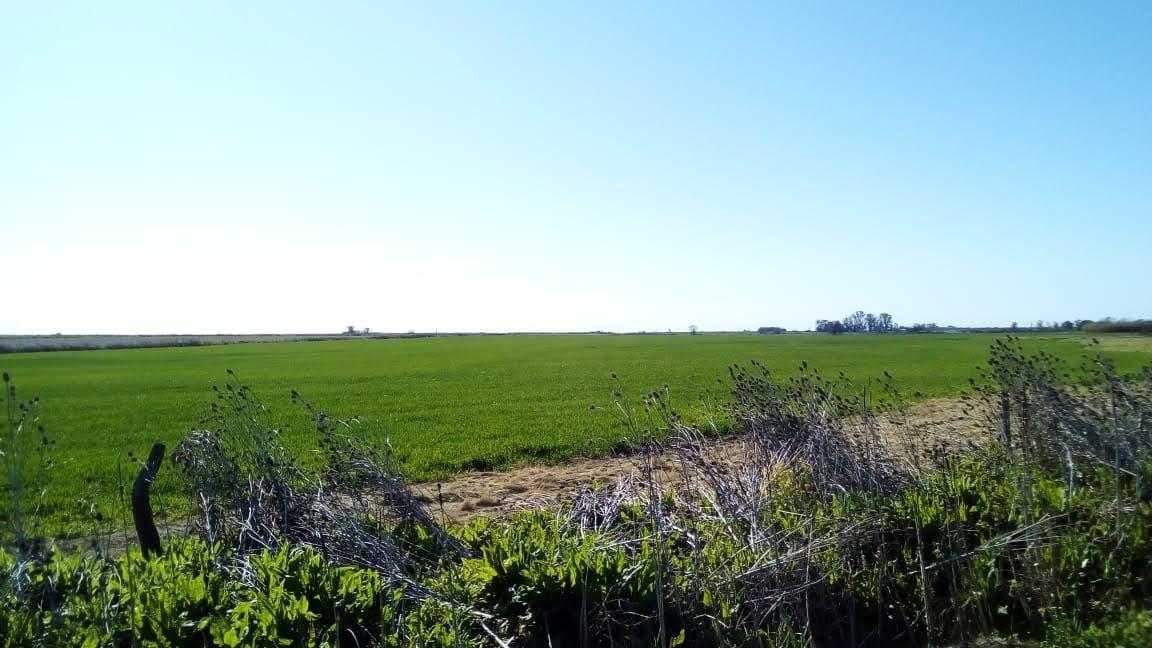 Campo 75has Agrícola